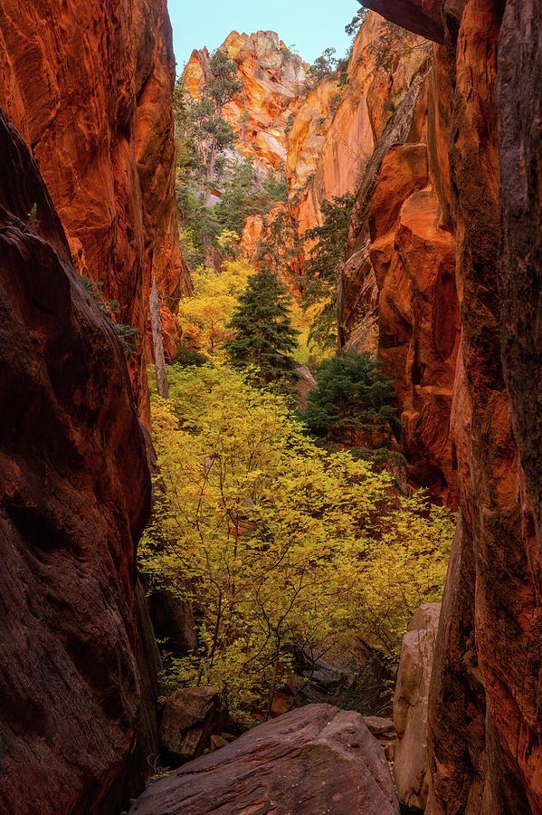 Autumn Canyon by Dustin LeFevre