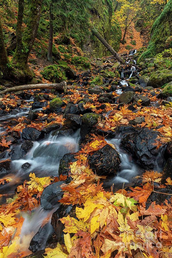 Autumn Cascade by Mike Dawson