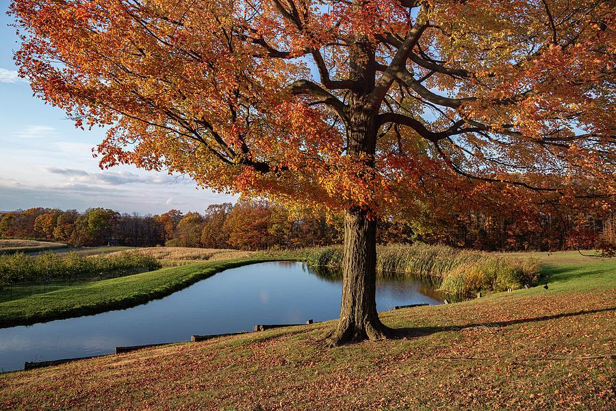 Autumn Charm Photograph