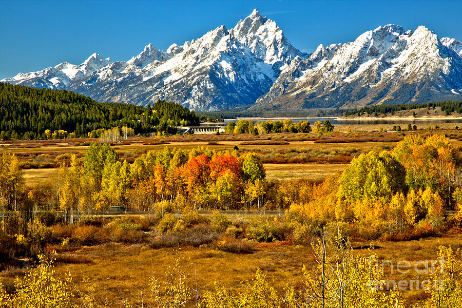 Autumn Clusters Under The Tetons by Adam Jewell