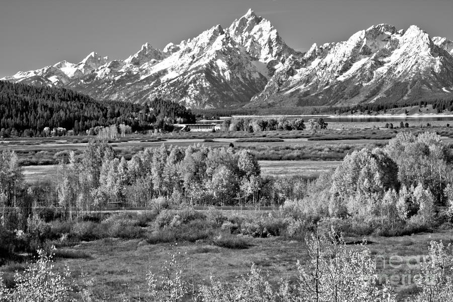 Autumn Clusters Under The Tetons Black And White by Adam Jewell