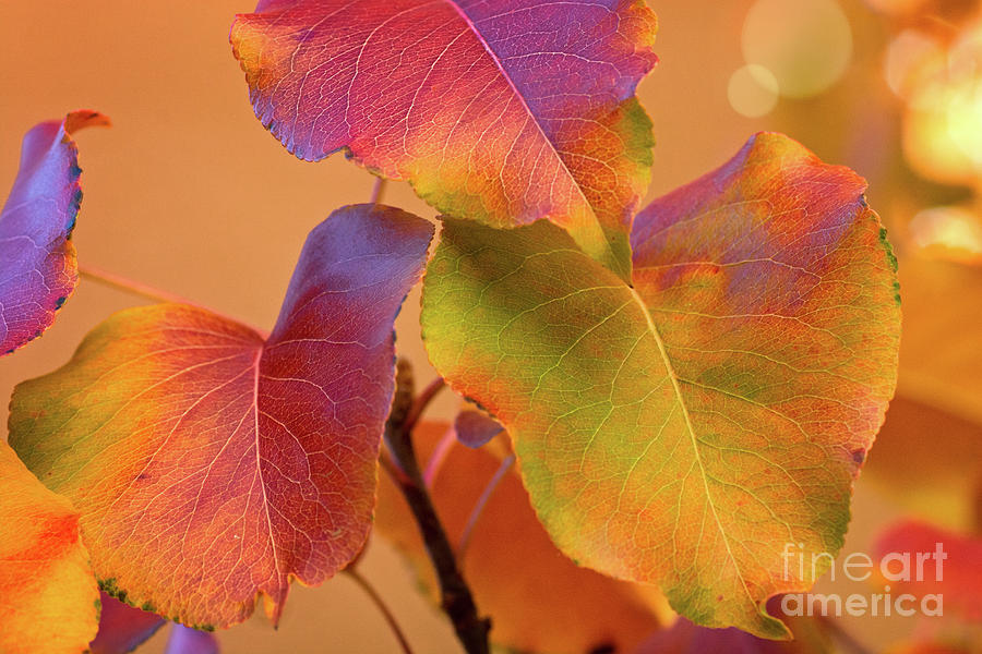 Autumn Color by Susan Warren