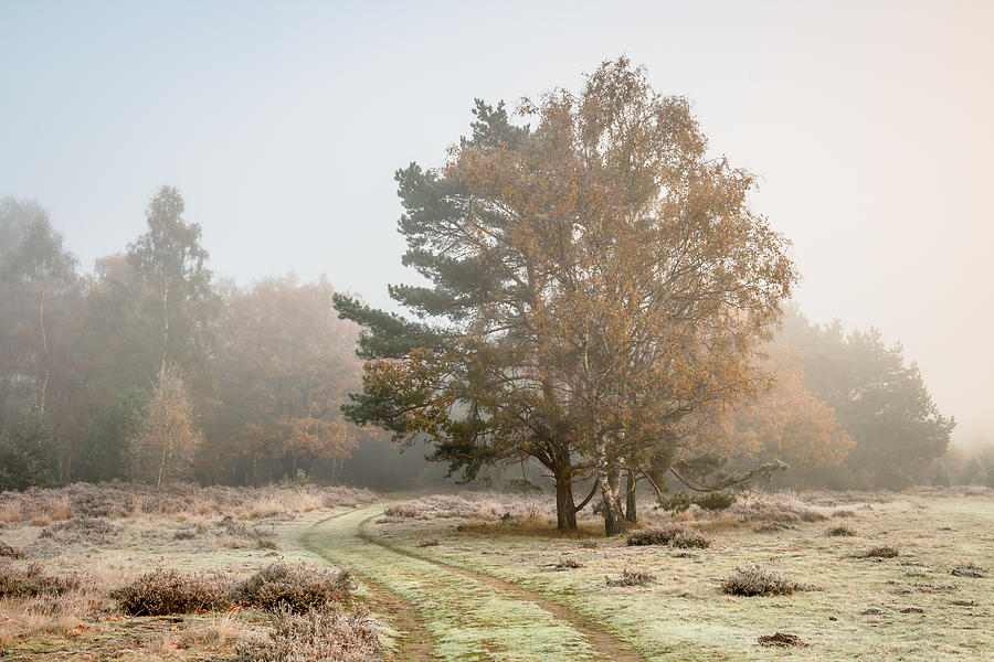 Autumn Colors In The Mist Photograph by William Mevissen