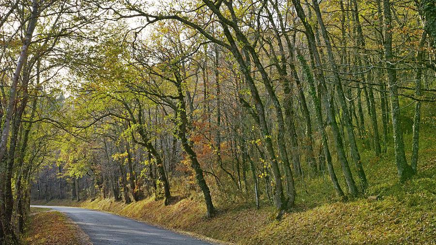 Landscape Photograph -  Autumn colors by Karine GADRE