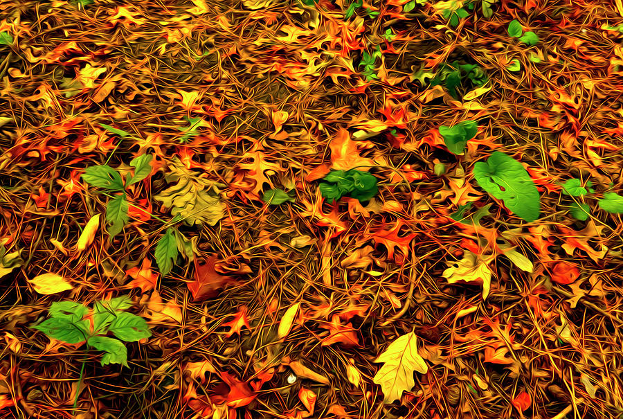 Autumn Colors On The Forest Floor Photograph