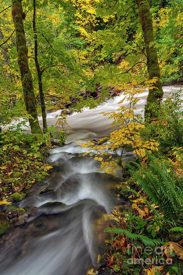 Autumn Confluence by Mike Dawson