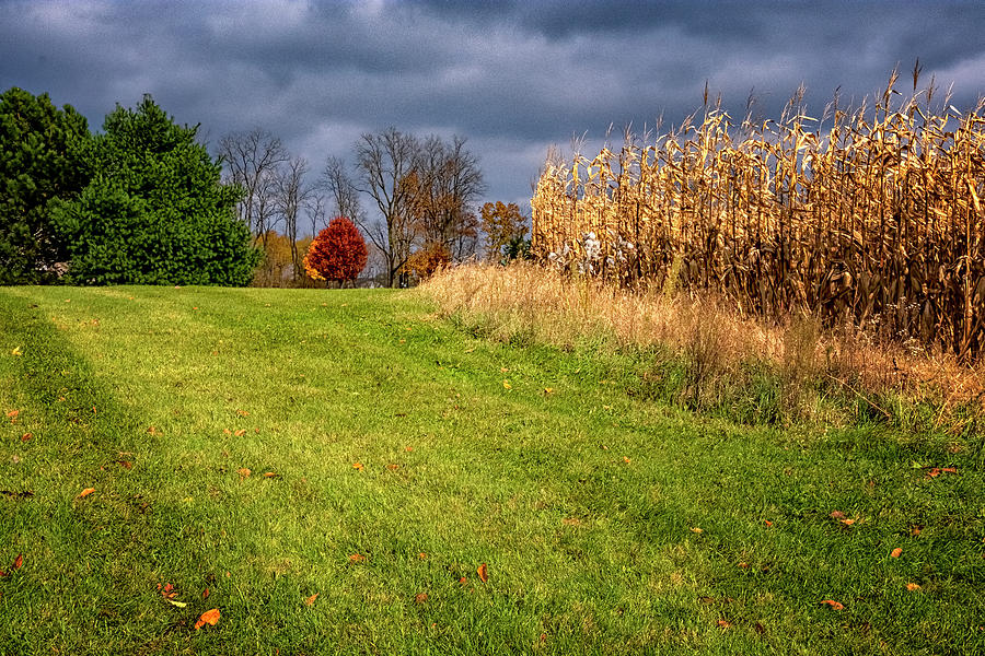 Autumn Corn Field by Tom Singleton