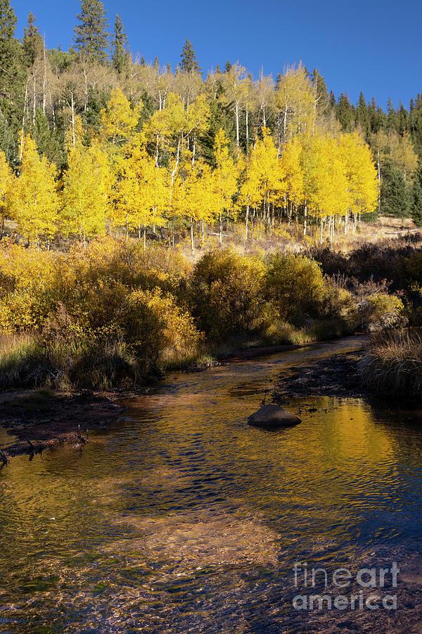 Autumn Creek On Anne-marie Falls Trail Photograph
