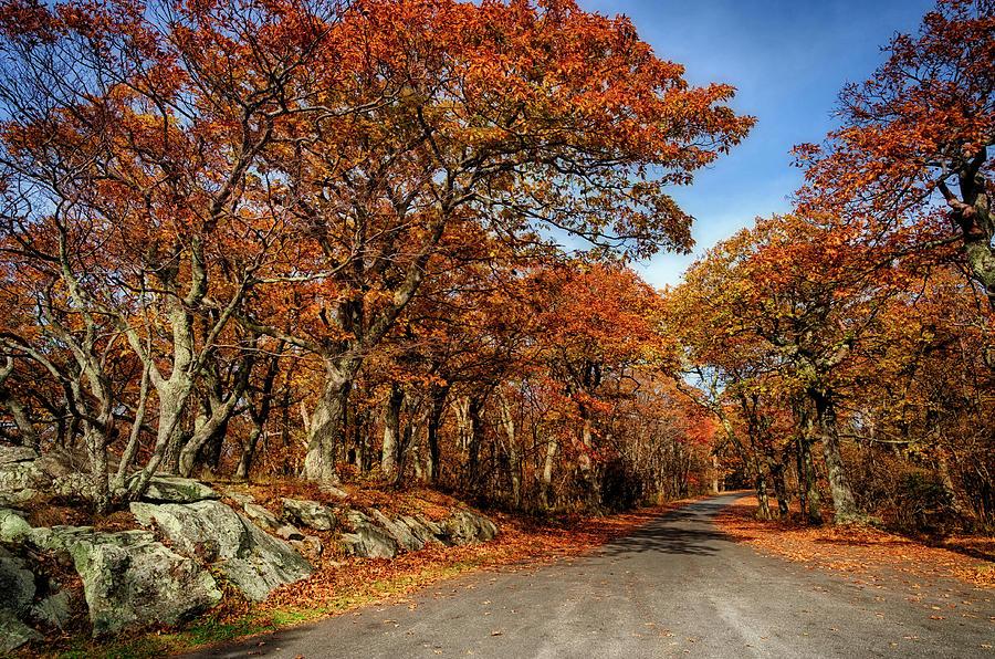 Fall Photograph - Autumn Dreams 1 by Lara Ellis