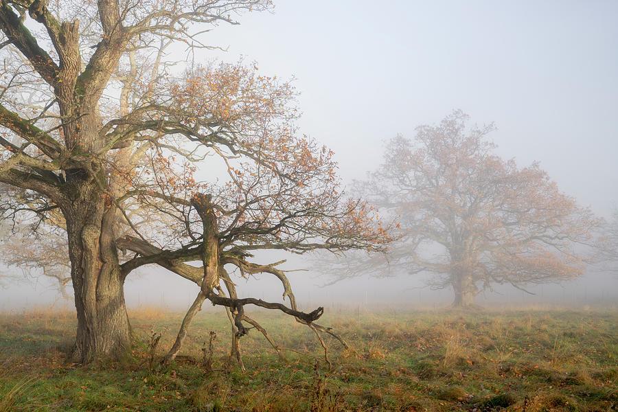 Autumn Dreams Photograph