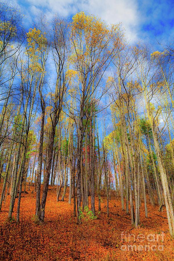 Autumn Ends by Dan Carmichael