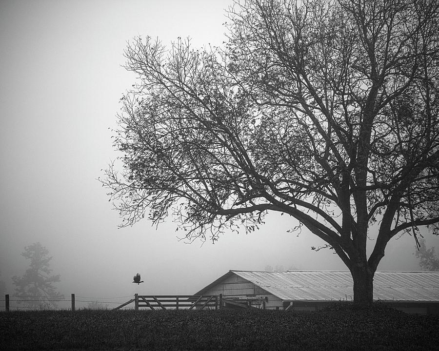 Autumn Farm by Patrick M Lynch