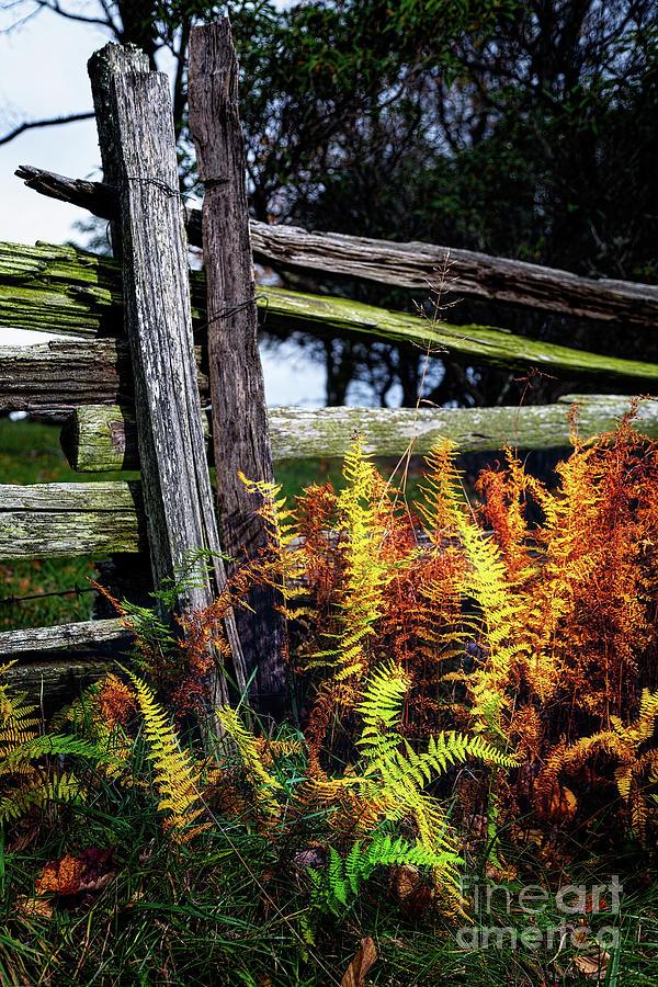 Autumn Ferns on the Split by Dan Carmichael