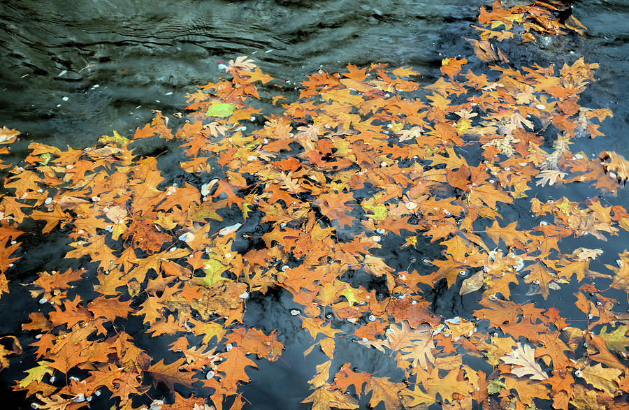 River Photograph - Autumn Floats On By by Bonfire Photography