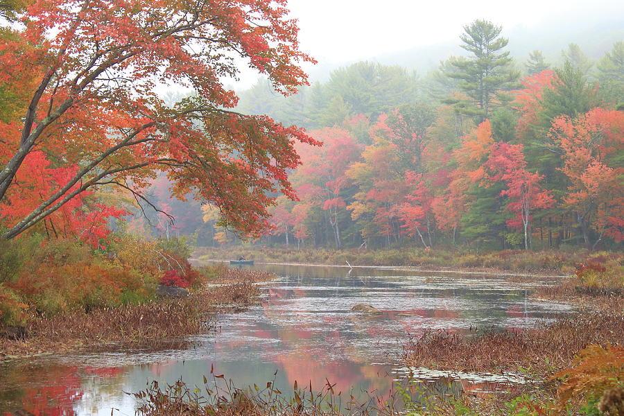 Autumn Fog Photograph