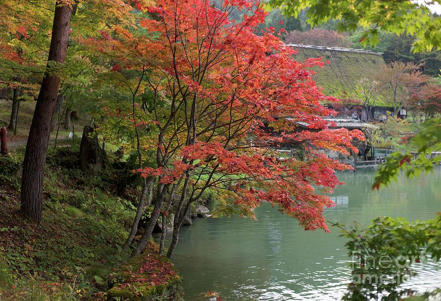 Autumn Foliage Photograph