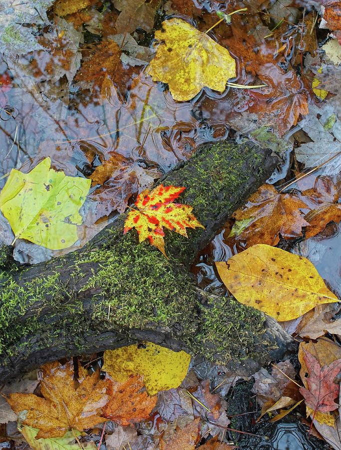 Autumn Forest Floor by Kathi Mirto