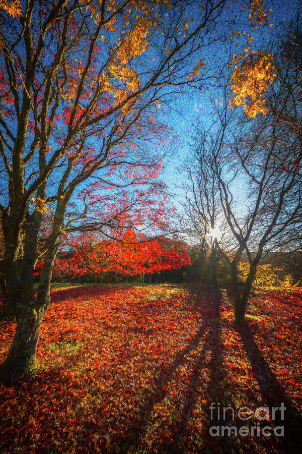 Acer Photograph - Autumn Forest Shadows by Adrian Evans
