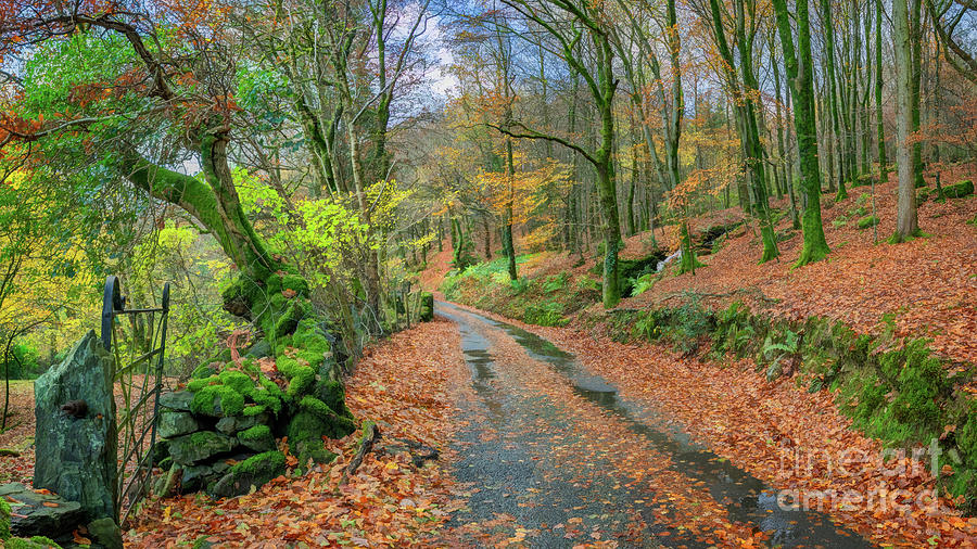 Autumnal Photograph - Autumn Forest Snowdonia by Adrian Evans