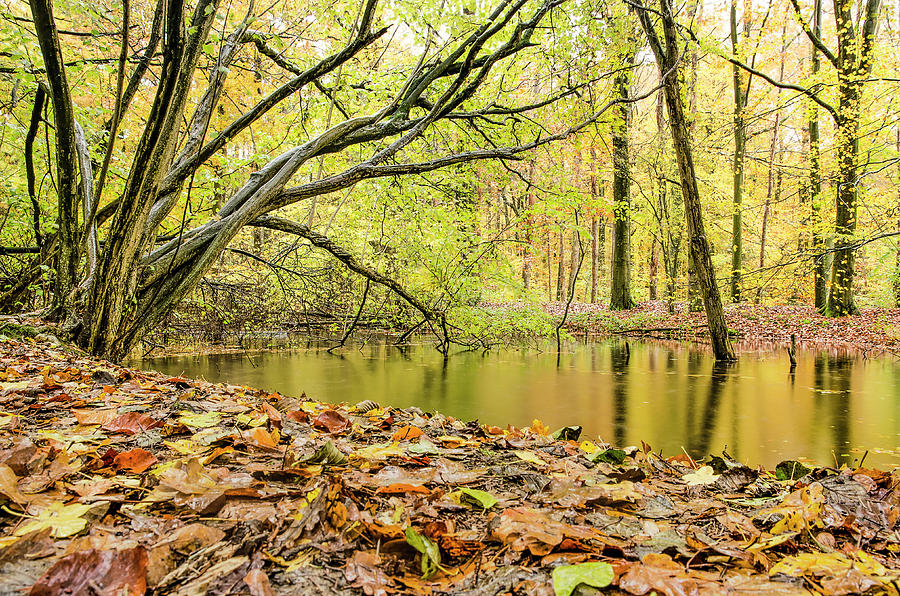 Autumn forest with pond and fallen leaves by Frans Blok