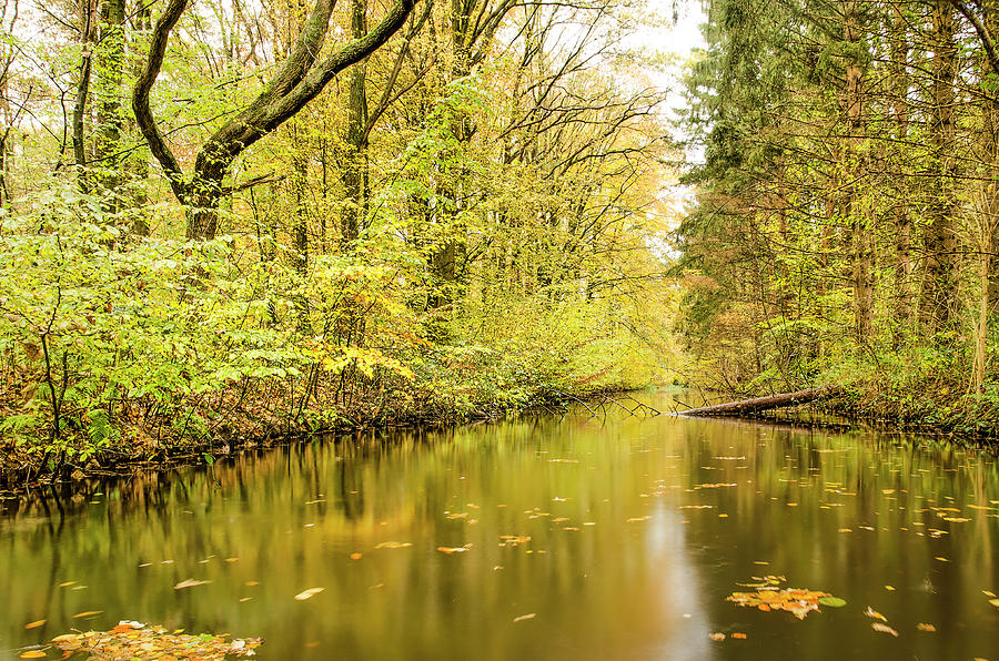 Autumn forest with reflection in canal by Frans Blok