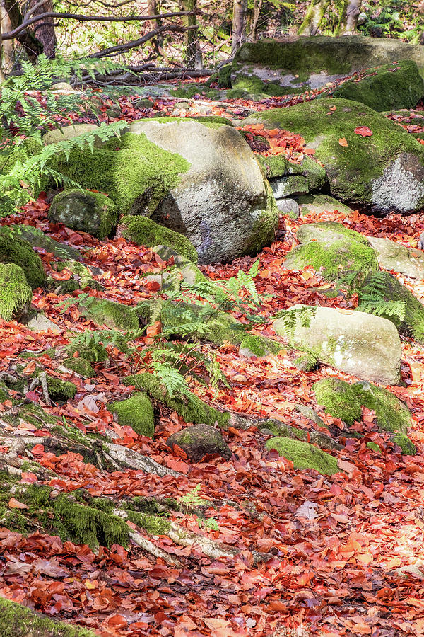 Autumn Glory 2 by Susan Leonard