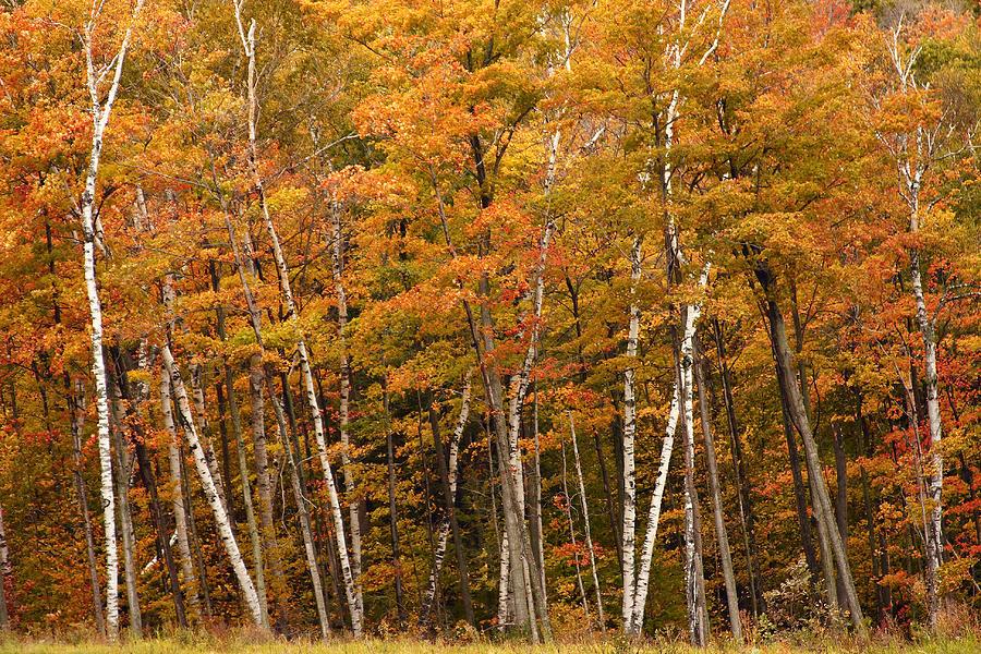 3scape Photograph - Autumn Glory by Adam Romanowicz