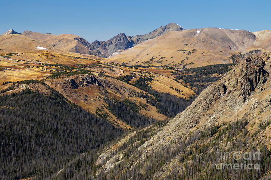Autumn Glory On Trail Ridge Road Colorado Photograph