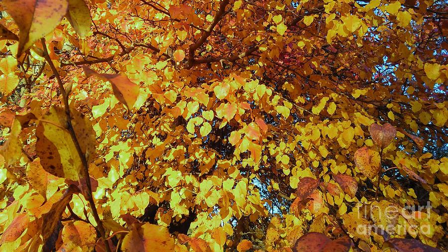 Autumn Gold by Robert Knight