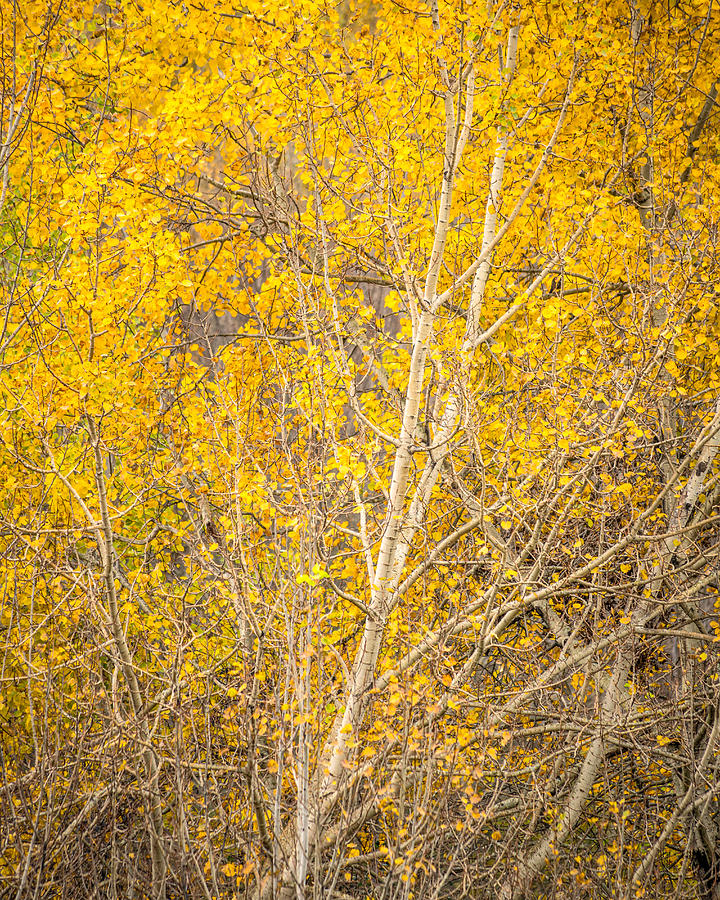 Autumn Gold by Rod Best