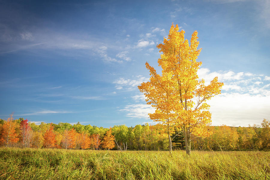 Landscape Photograph - Autumn in Acadia by Jake Sublett