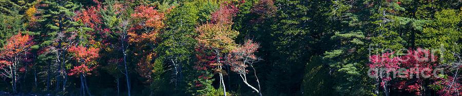 Autumn Photograph - Autumn In Acadia National Park, Maine 3 by Felix Lai