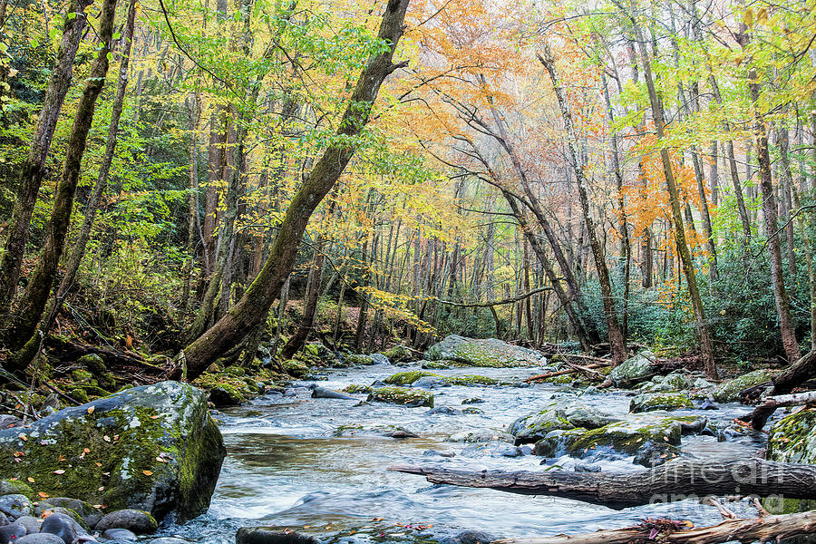 Autumn In Great Smoky Mountains National Park, 6 by Felix Lai