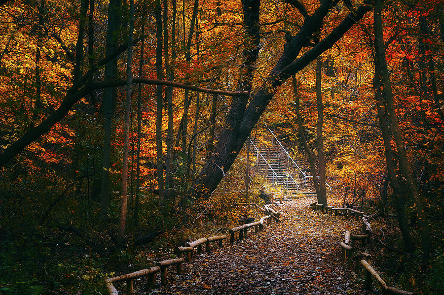 Fall Photograph - Autumn in Riverside Park by Scott Norris