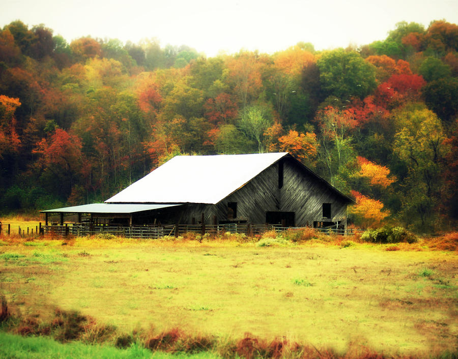 Autumn in Tennessee by Julie Hamilton