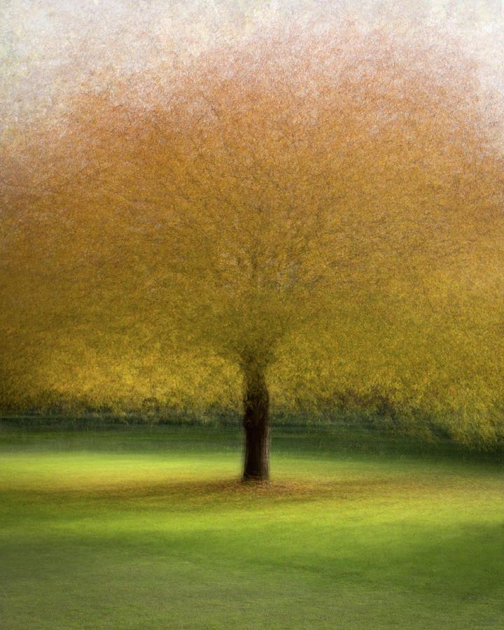 Autumn in the city by Dalibor Hanzal