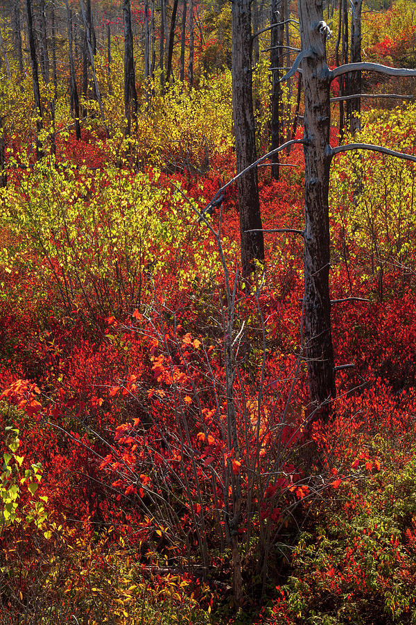 Autumn in the Purcells Cove Backlands #0574 by Irwin Barrett