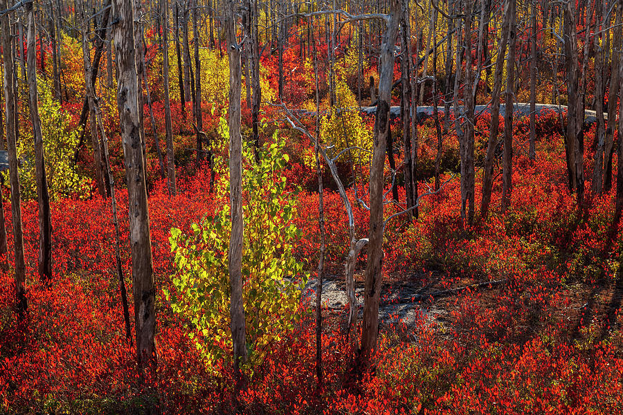 Autumn in the Purcells Cove Backlands #0640 by Irwin Barrett