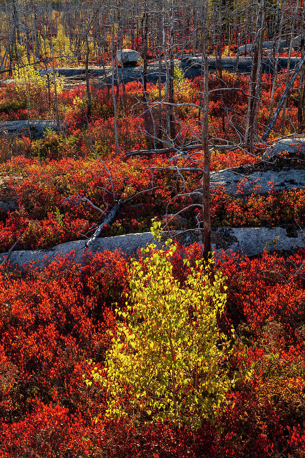 Autumn in the Purcells Cove Backlands #0648 by Irwin Barrett