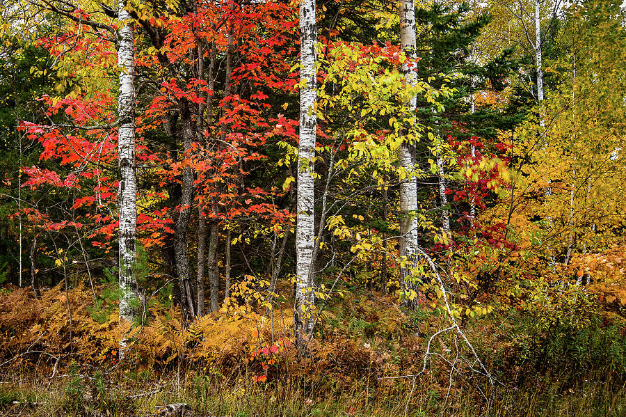Autumn in the UP County Road 448 by William Christiansen