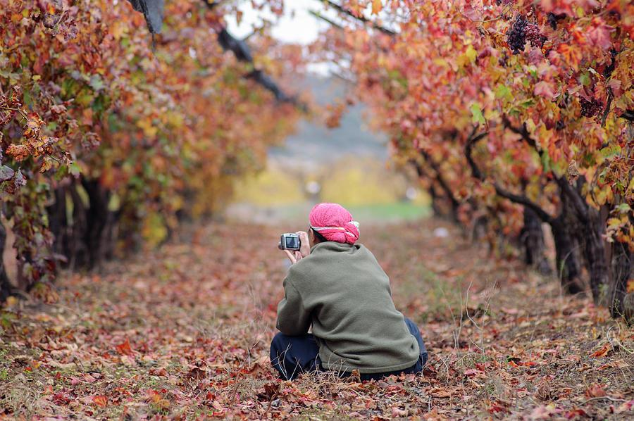 Autumn In The Vineyard Photograph