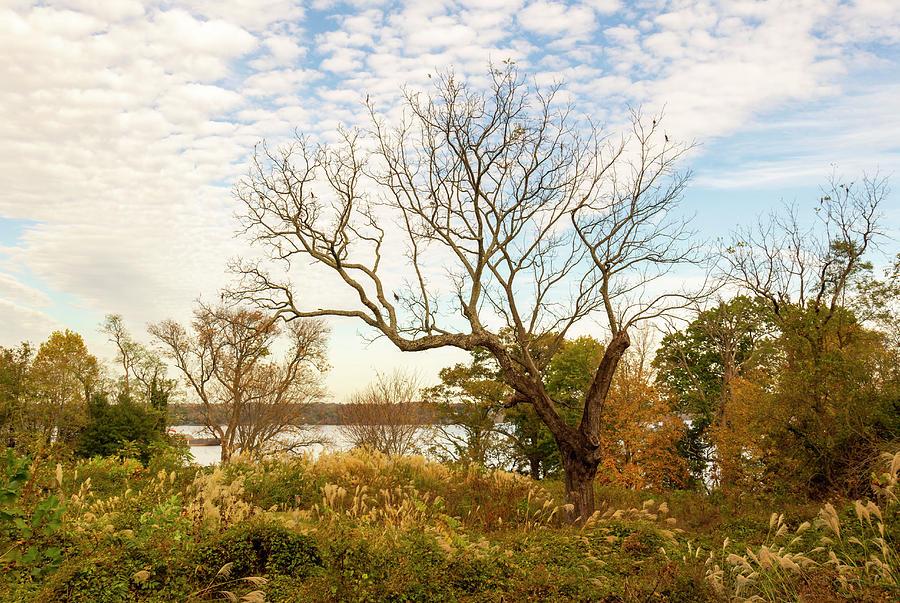 Autumn in Virginia by Amy Sorvillo