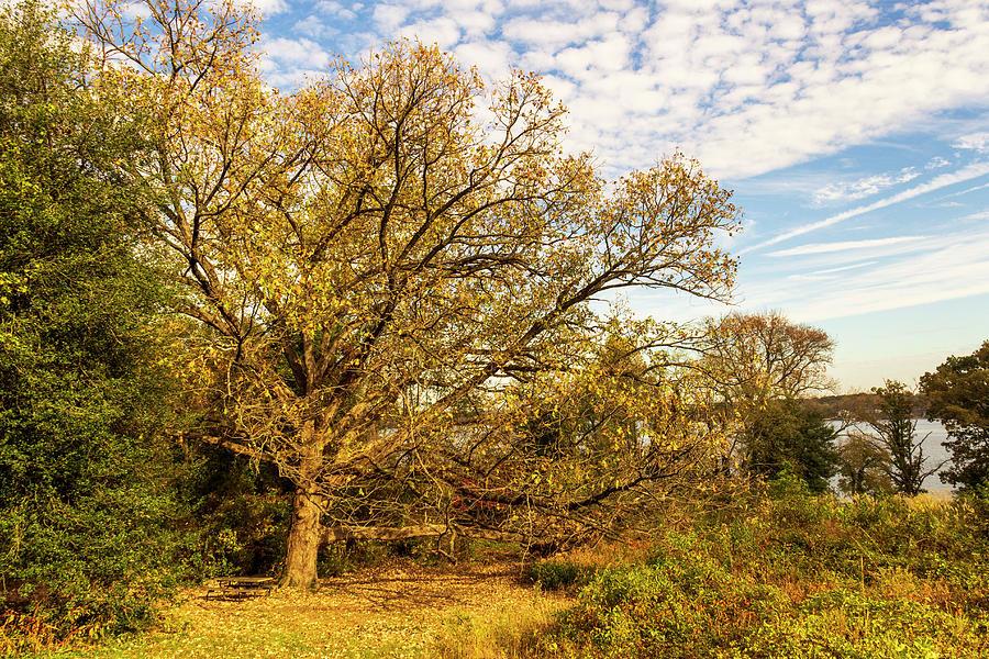 Autumn Landscape in Virginia by Amy Sorvillo