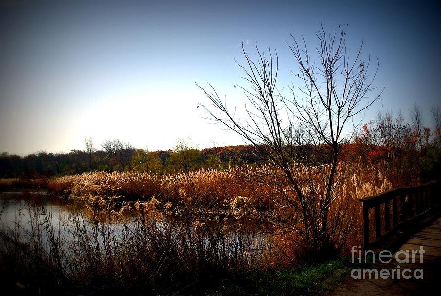 Autumn Landscape Wetlands Bridge Photograph by Frank J Casella