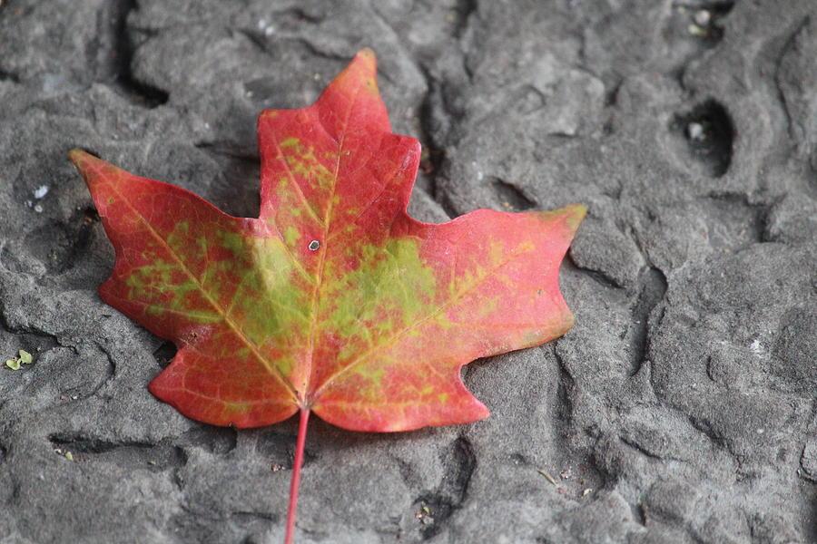 Maple Leaf Photograph - Autumn Leaf On A Sidewalk by Callen Harty