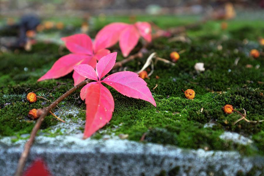 Autumn Leaves 1 Photograph
