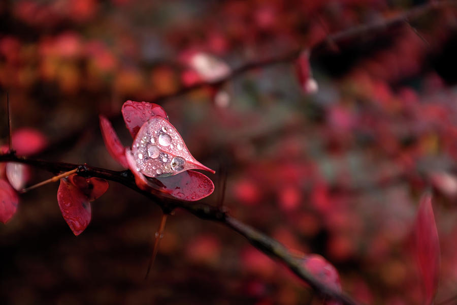Autumn Leaves 4 Photograph