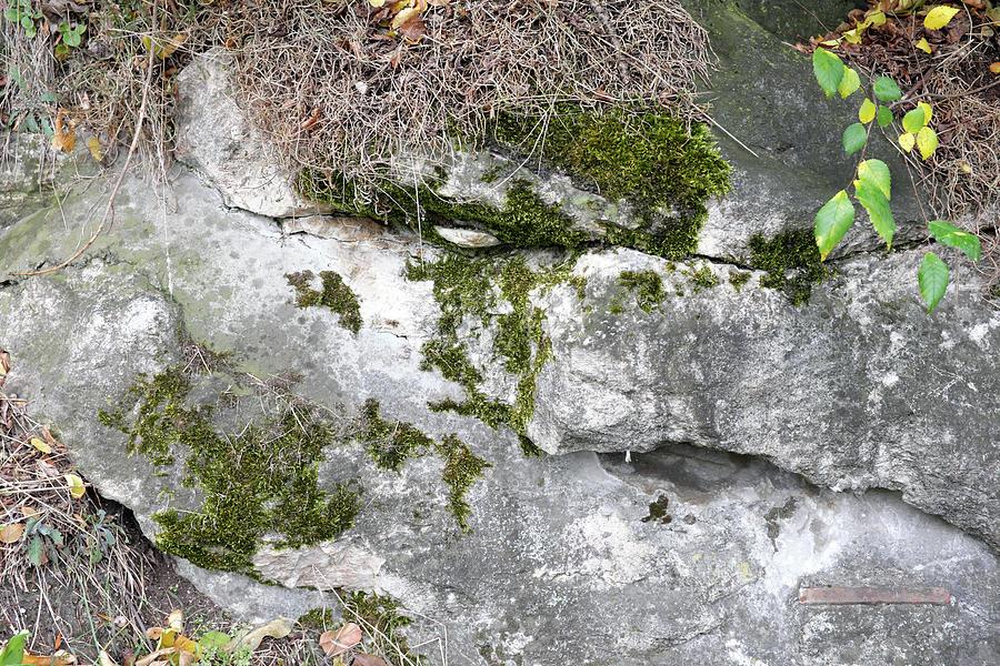 Autumn Leaves 5 Photograph