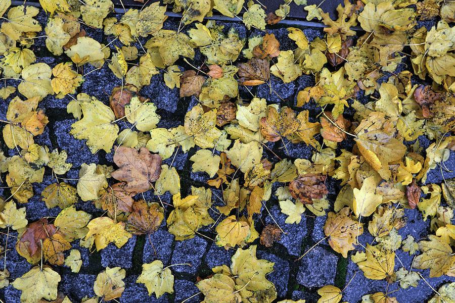 Autumn Leaves 6 Photograph