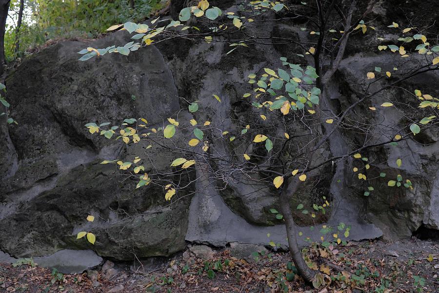 Autumn Leaves 7 Photograph